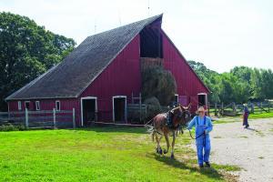 farmer leads mule away from barn at 1900-era farm, raising hay into barn